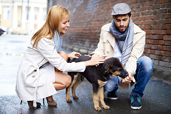 custodia compartida de mascota